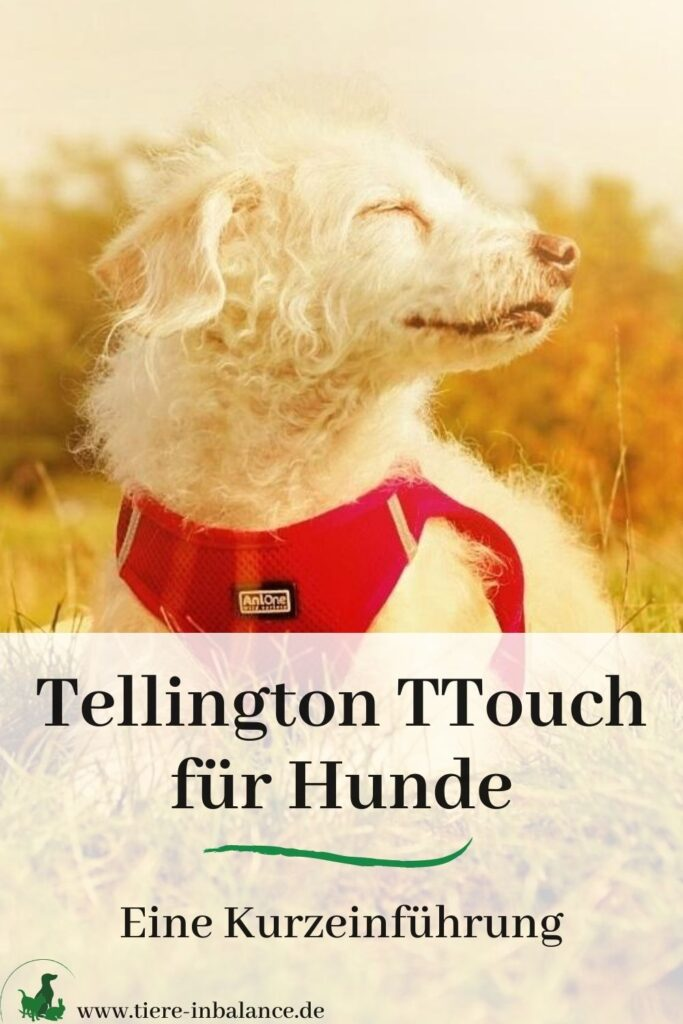 Was ist Tellington Touch