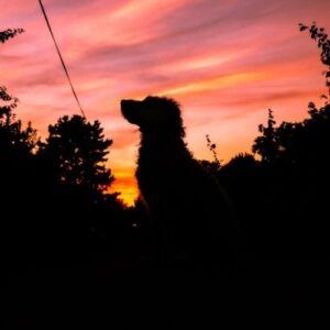 Hilfe für ängstliche Hunde an Silvester