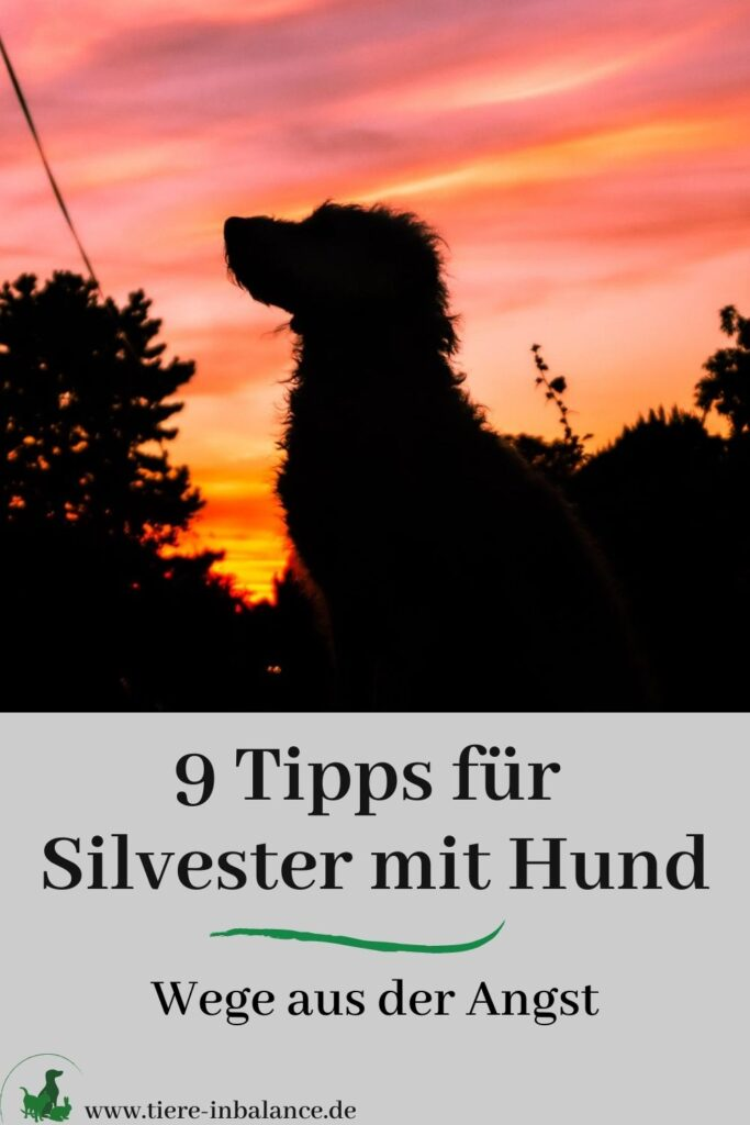 Mein Hund hat Angst an Silvester