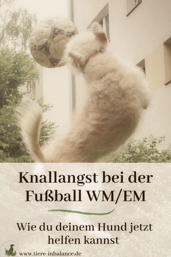 Hund hat Angst bei Fußball