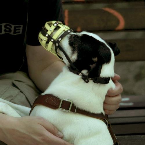 Der richtige Maulkorb für den Hund