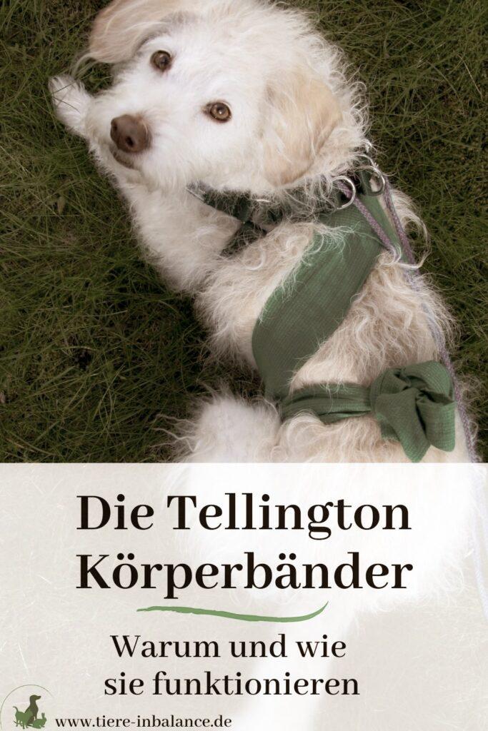 Tellington TTouch Körperbandagen