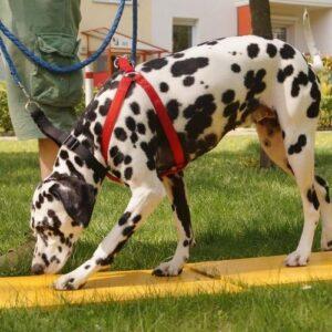 Tellington TTouch Bodenarbeit mit Hund