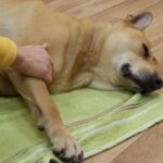 Schmerzen beim Hund