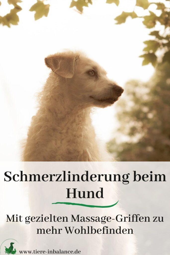 Hundemassage