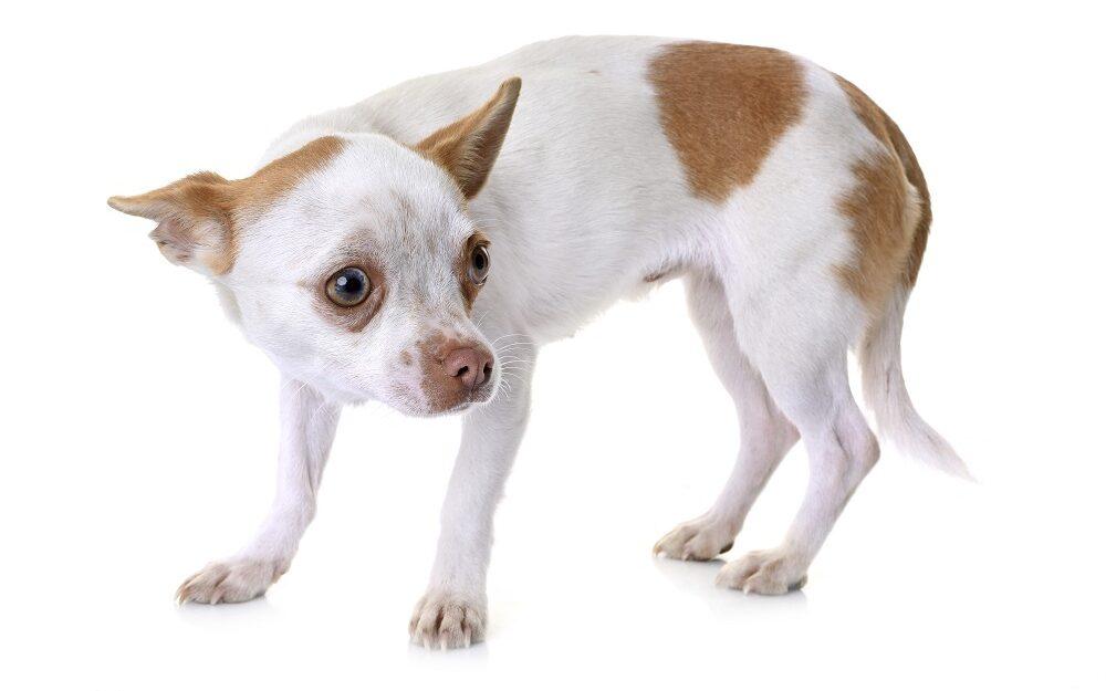 Hilfe mein Hund hat Angst