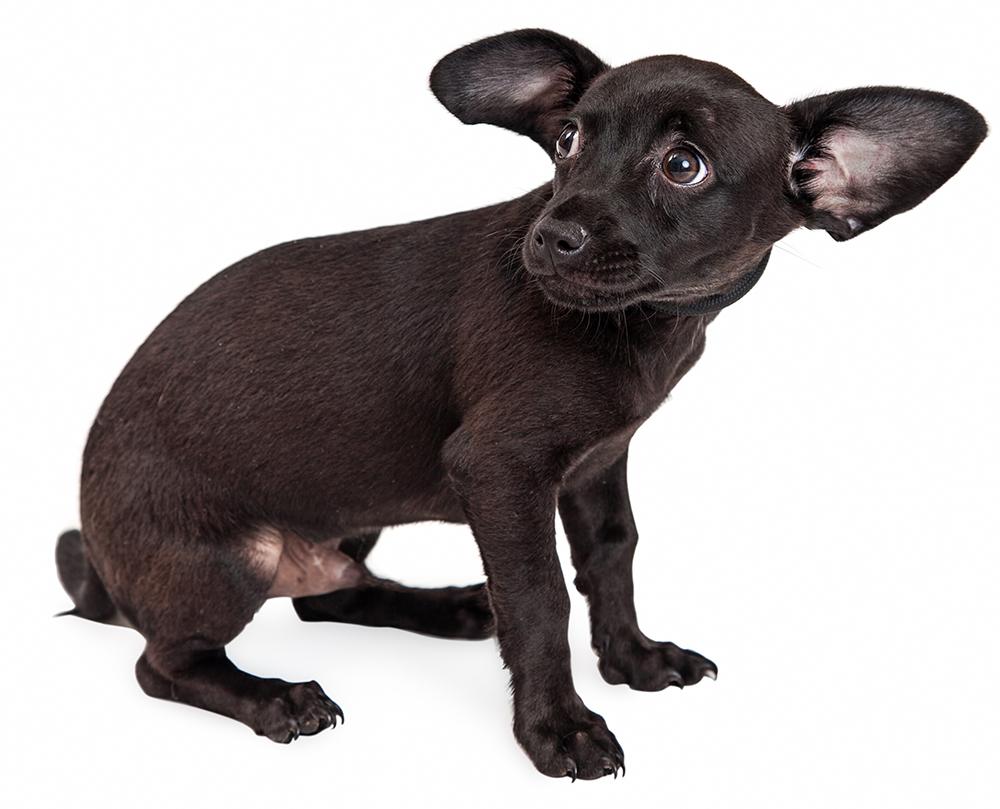 Hilfe für ängstliche Hunde